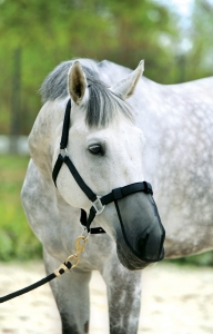 78b1790d86941e www.horsetack.pl/environment/cache/images/300_300_...