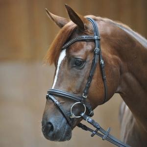 26bfb2b1a0603 Sklep jeździecki Horse Tack w Olsztynie
